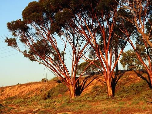 australia autumn mildura ranufurlylake victoria