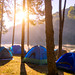 Camping and tent under the pine forest in sunrise