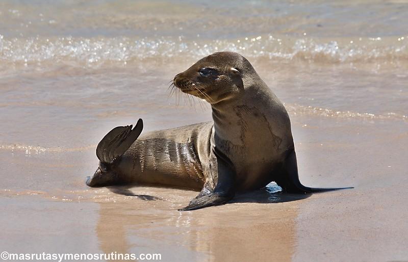 Acuavacaciones en Galápagos y Ecuador