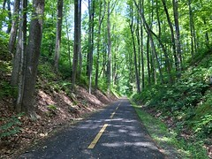 a cathedral of trees on the WO&D Trail
