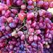 grapes por ikarusmedia