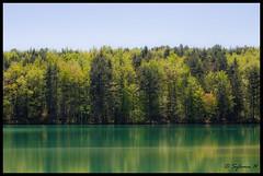 Le lac de Montbel - Photo of Bélesta