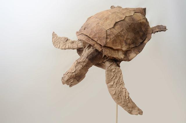 Sea turtle, Nikon D7000, AF Nikkor 20mm f/2.8D