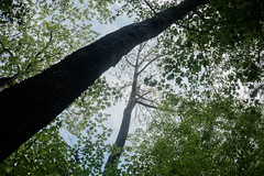 Lovely Walk in the Woods