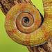 Chameleon 2 by Finding Chris