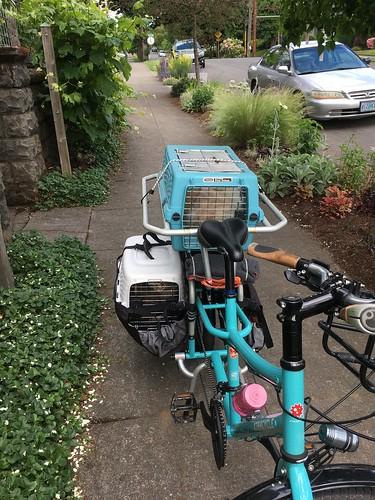 Cats on a Bike