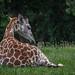 Giraffic Park hangout by Pejasar