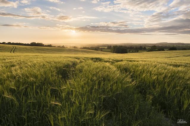 Barley Fields - Explored!