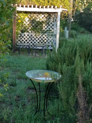 birdbath sittingarea rosemary bushes