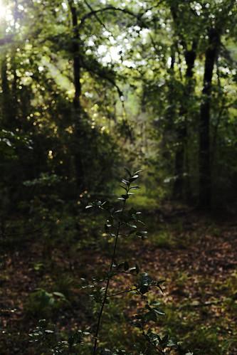 6d canon ef2470f28l eos home morning naturalbeauty naturallight nature outdoor prairie summer sunlight sunrise tarkington texas topazlabs beautiful colors bokeh dof depthoffield sunrays lightandshadow