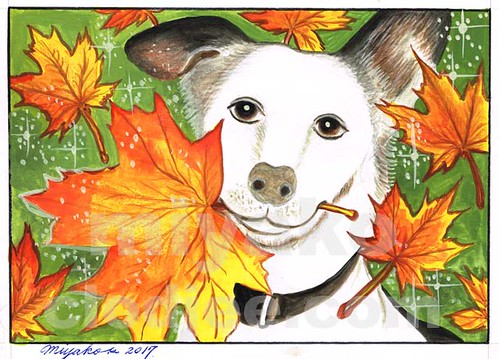 Dog with Maple Leaves (01)