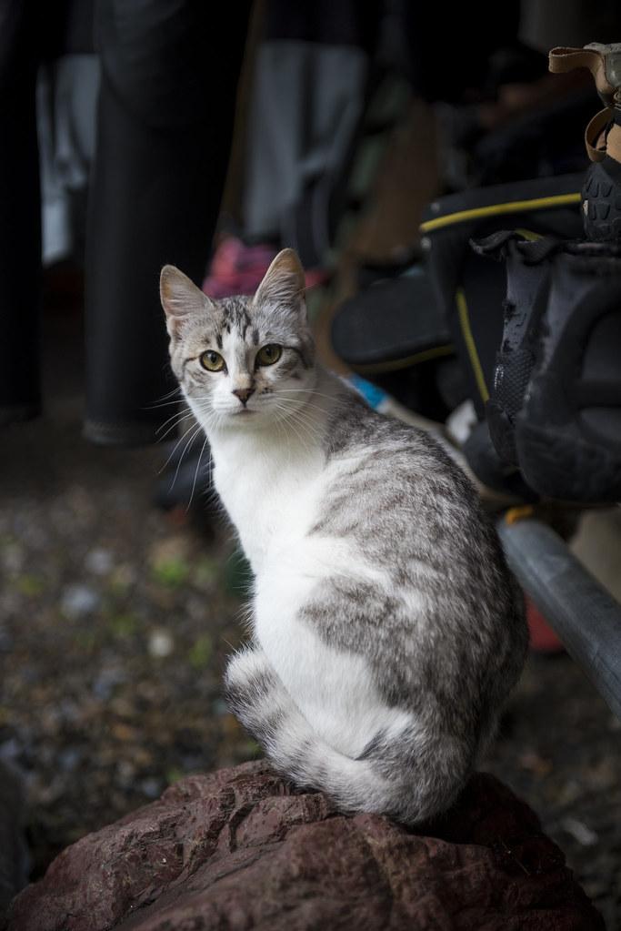 cat @ okutama