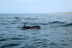 Dolphin Survey trip 18th May 2017
