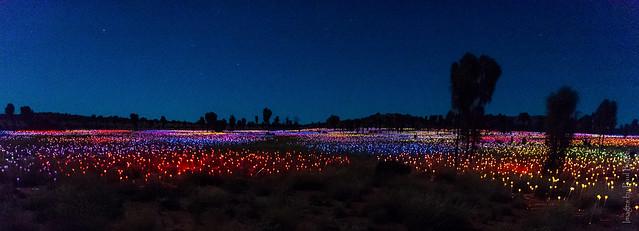 The Field of Light, Nikon D750, AF-S Nikkor 24-70mm f/2.8E ED VR