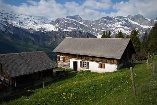 m2404274 rangefinder digitalrangefinder messsucher leica leicam mp typ240 type240 28mm elmaritm12828asph hiking wanderung randonnée escursione engelberg alps alpen ruchweg spring frühling switzerland schweiz suisse svizzera svizra europe engelbergbrunni engelbergertal ©toniv 2017 170527 obwalden