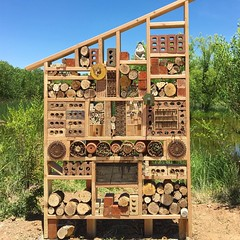 Bee Hotel! Such fun! Thanks to @shericrider @elena505 and @color_finds ! @516_arts #crosspollination #wildbees #openspacealbuquerque #beehotel