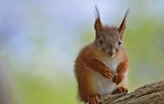 - What's for lunch today? Baby Squirrel