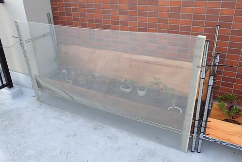 盆栽棚に網