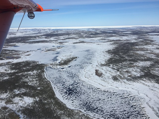 South-eastern coastal Labrador still locked in ice in late May. Photo Credit: USFWS