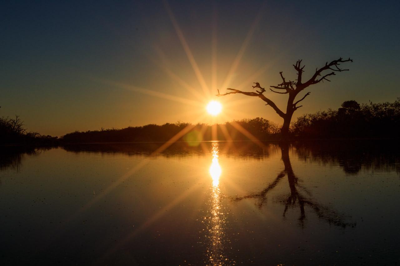 Los primeros rayos de sol se filtran entre las ramas de un árbol seco, a causa de la salinidad de las lagunas. (Tetsu Espósito)