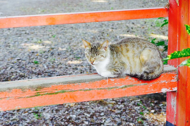 Today's Cat@2017-05-24