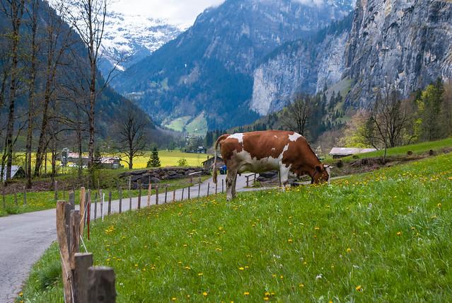 2017 05 - Suiza-39.jpg