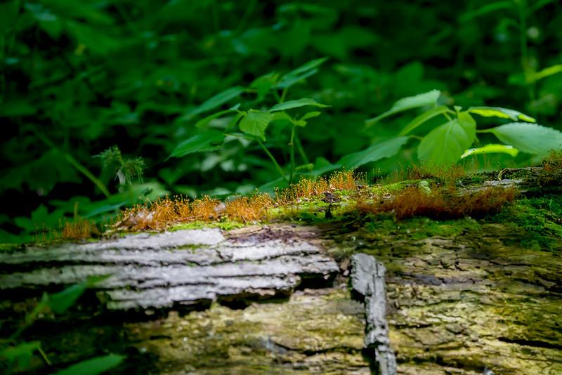 Berns-Meyer Nature Preserve - May 31, 2017