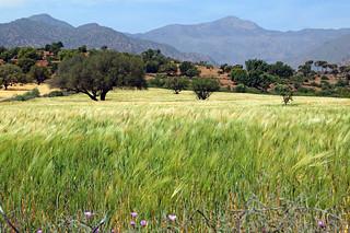 Maroccan landscape