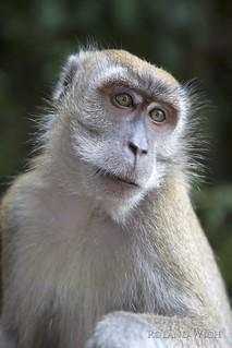 Monkey at Butu Caves