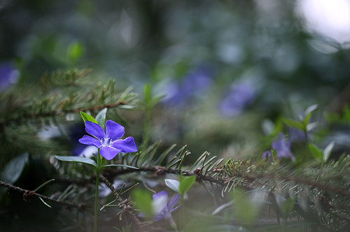 Wie ich was im Ferienhaus kaputt machte, es im nächsten Baumarkt zum Glück keinen Ersatz gab und ich deshalb einen Wald voller Blumen fand.