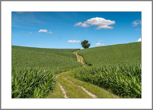 Mein Weg (My path)