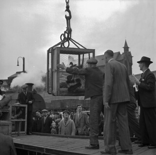 Unloading animals at the Corporation Quay