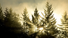 110 Tree Wallpapers Widescreen
