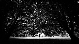 The man and the trees - Cong, Ireland - Black and white photography