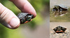 painted turtle triptych by marianna_a.