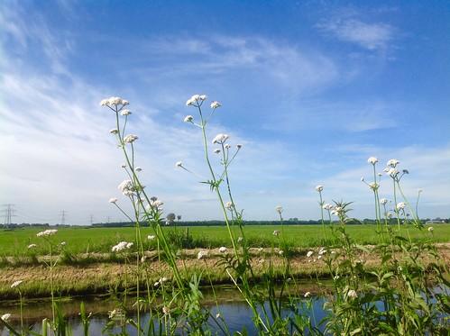 Zonnig weer maar ook wolkenvelden - Foto: Tiny Post.