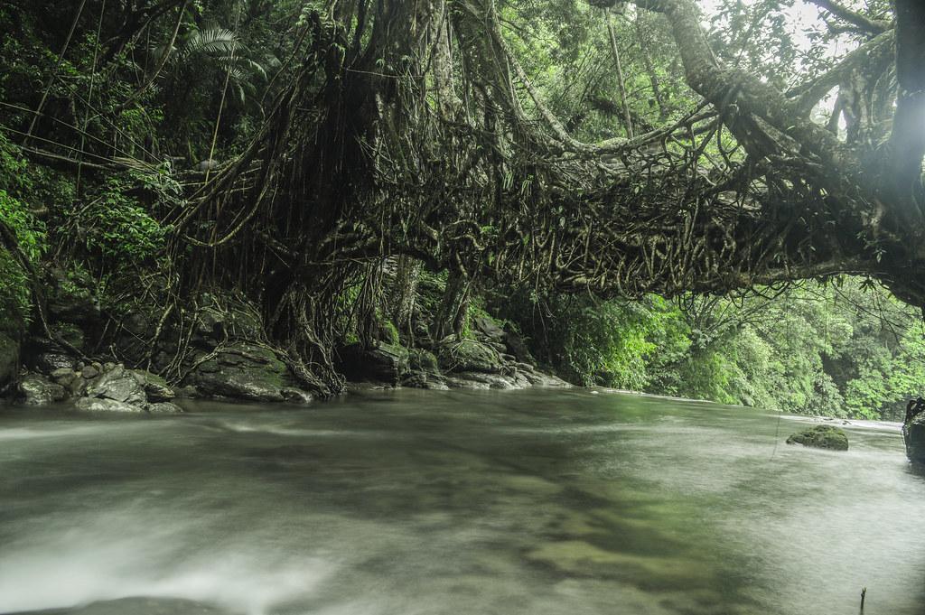 Living Root Bridge,Mawlynnong