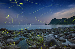 Firefly Flying on the Beach - at Izu-Peninsula West-Coast