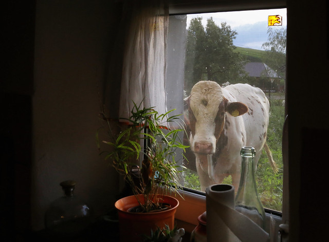 Meet our neighbor in the kitchen window
