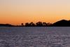 Sunrise Silhouette Trees on Motukorea/Browns Island