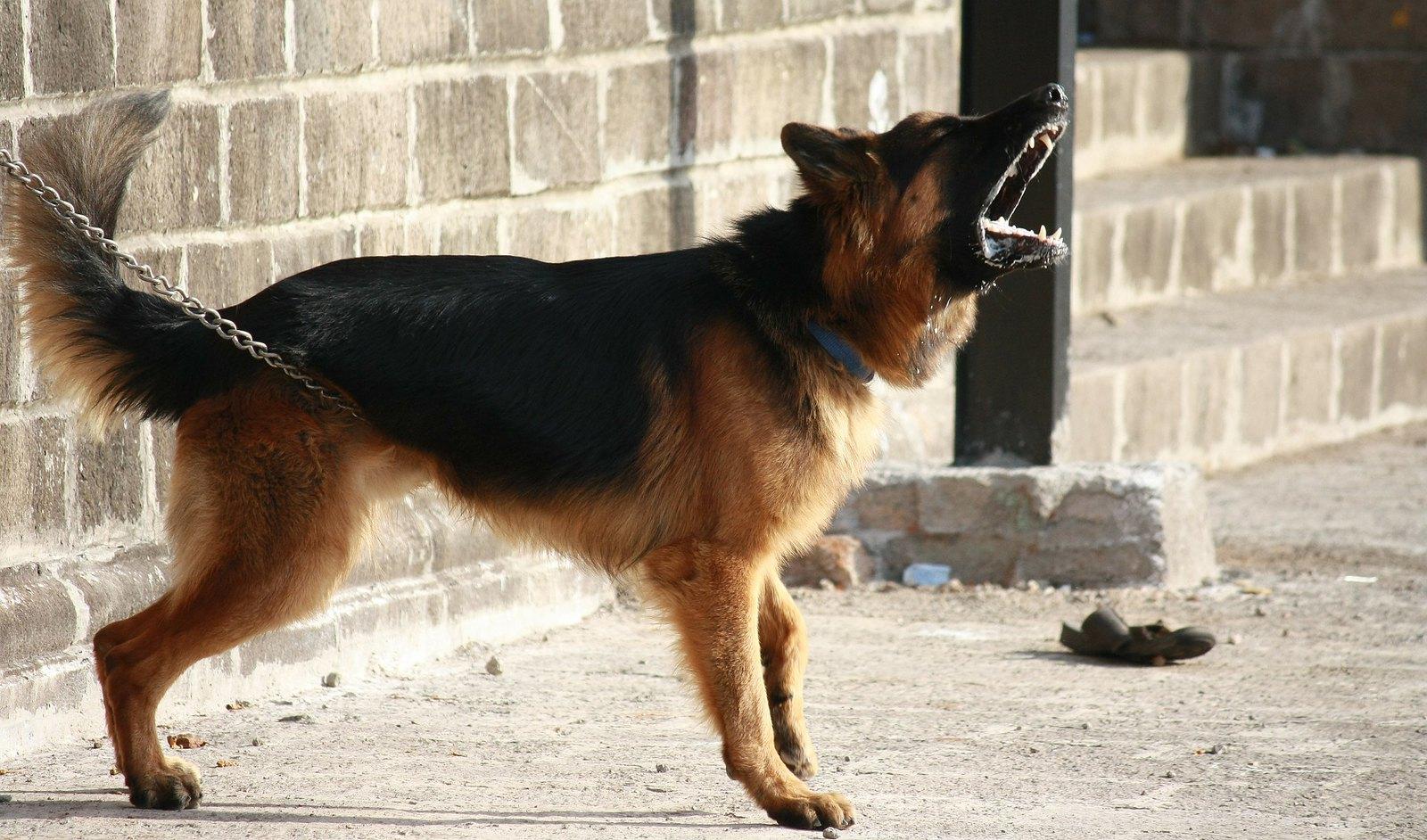 大声で吠える犬