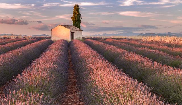 La Lumière du Soir Provençal