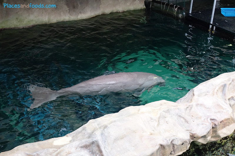 dugong in sydney
