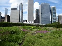 Chicago, Millennium Park, Lurie Garden, Pritzger Pavilion, and Randolph Skyscraper Wall