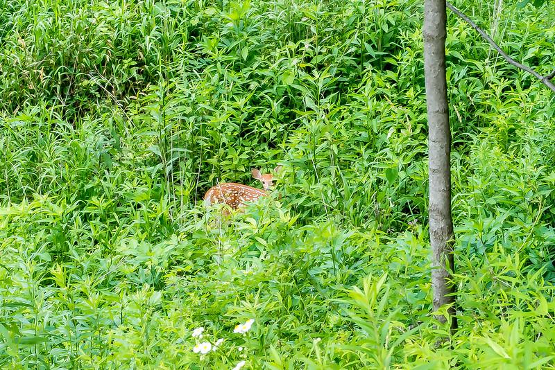 Meno-aki Nature Preserve - June 22, 2017