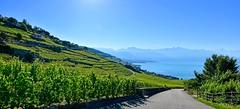 Pays de Vignes