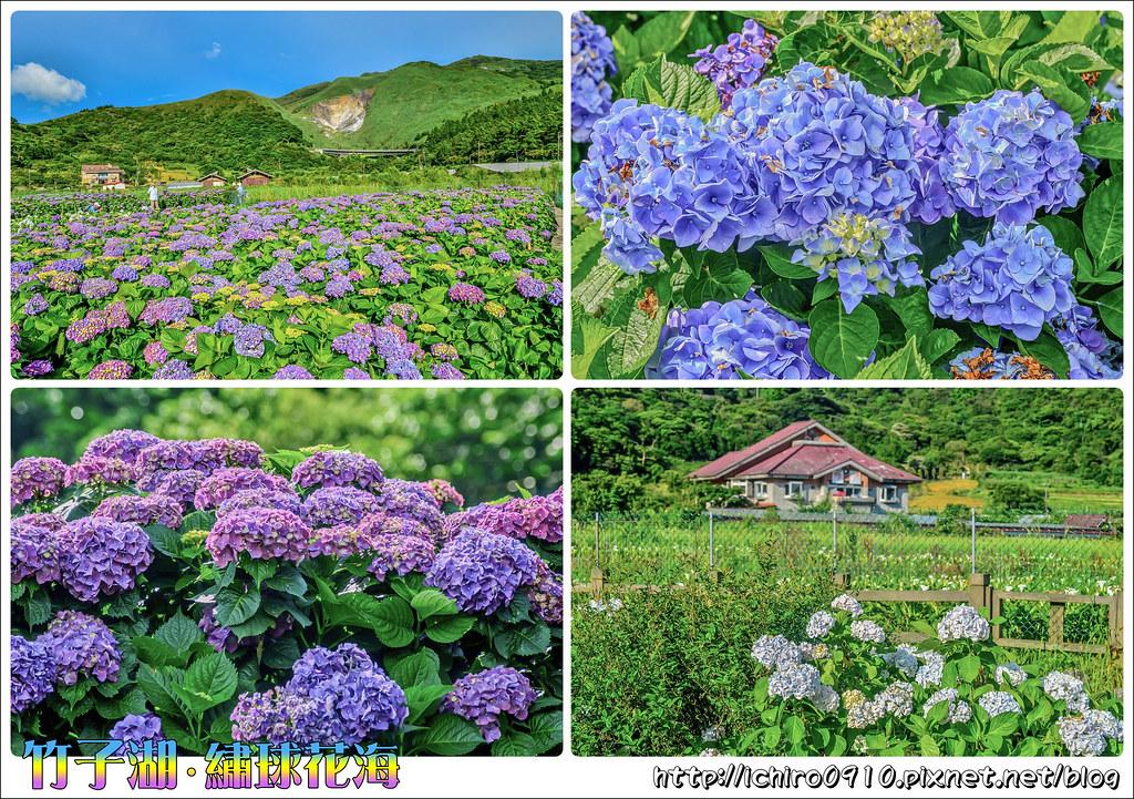 20170607竹子湖繡球花_170608_0009-tile