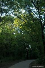 sun on the treetops