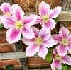 #flowers #macro #fb #fl