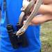Smooth Snake (Ed Drewitt)